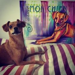 Custom Dog Portrait with Subject - instagram.com/jacksontheadventruredog/ -